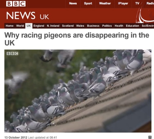 BBC Breakfast tries pigeon racing